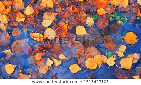 yellow red leaves fall colors green water reflection abstract we stock photo © billperry