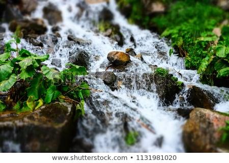 In streaming acqua piccolo fiume luminoso campagna Foto d'archivio © olandsfokus