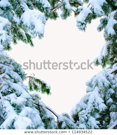 Natale evergreen abete rosso albero fresche neve Foto d'archivio © pixachi