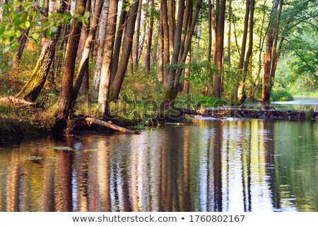 Symmetrie zomer landschap vijver water boom Stockfoto © CaptureLight