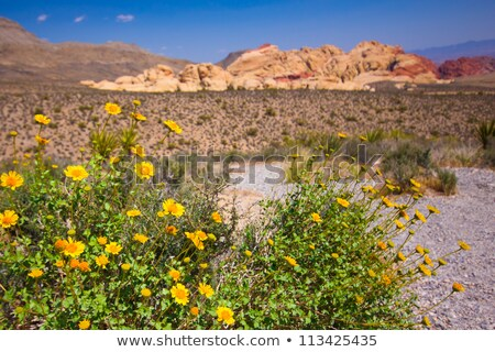 visiting the red rock canyon nevada stock photo © rigucci