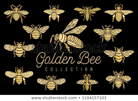 golden bee Stock photo © kovacevic