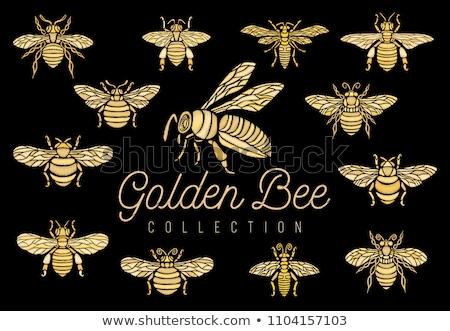 gouden · bee · honingraat · natuur · gezondheid · achtergrond - stockfoto © kovacevic