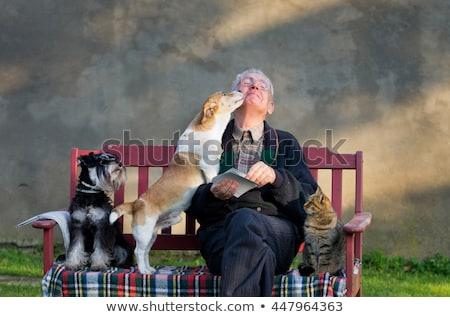 Mascota terapia gatito cute armas ancianos Foto stock © suemack