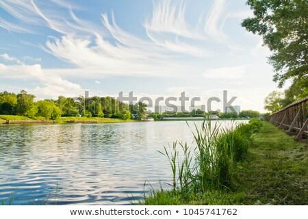 Gölet yaz gün görmek doğal bitki örtüsü Stok fotoğraf © EFischen