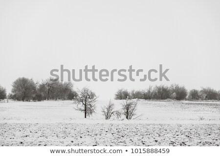 Vidéki földút zúzmara tájkép út erdő Stock fotó © Juhku