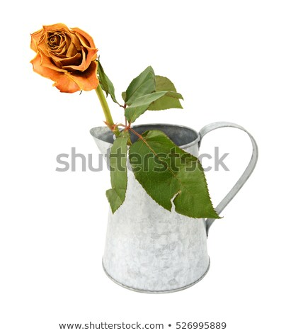 Dying orange rose stem in a metal pitcher Stock photo © sarahdoow