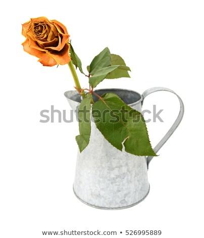 narancs · rózsa · közelkép · kép · virág · szexi - stock fotó © sarahdoow