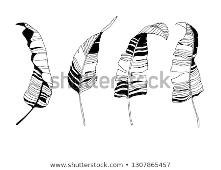 set of contour leaves stock photo © blackmoon979