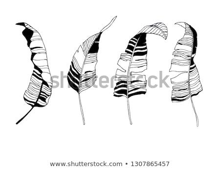 клен · листьев · черно · белые · изолированный · коллекция - Сток-фото © blackmoon979