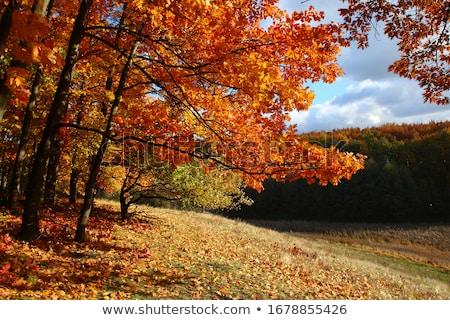 Paisaje otono árboles ladera montana pueblo Foto stock © Kotenko