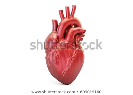 Heart anatomy and cardiogram on a white background Stock photo © Tefi