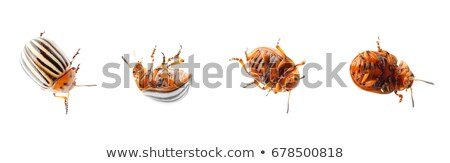 Colorado beetle difference  Stock photo © Olena