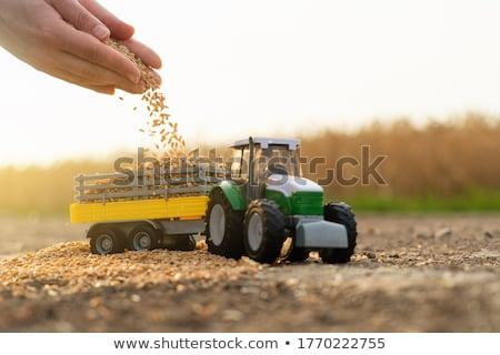 Mezőgazdasági traktor játék búza búzaszemek szelektív fókusz Stock fotó © stevanovicigor