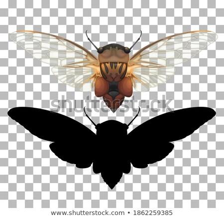 Cicada vector illustration clip-art image vector Stock photo © vectorworks51