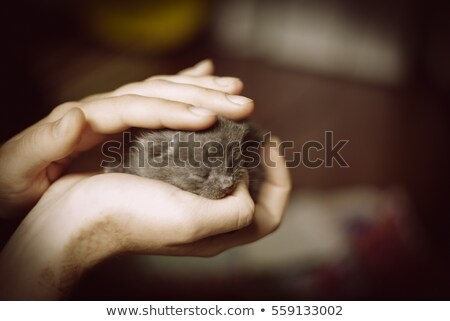 little kitty on hand stock photo © simply