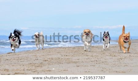 Stockfoto: Lopen · strand · bruin · najaar · hond · zee