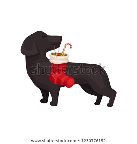 Cartoon chien bonbons canne illustration Photo stock © bennerdesign