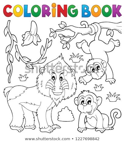 Boyama Kitabi Maymun Kitap Sanat Hayvanlar Orman