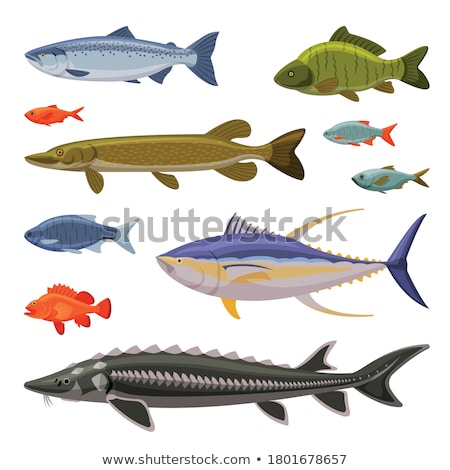 Aquarium vis cartoon illustratie ingesteld zes Stockfoto © robuart