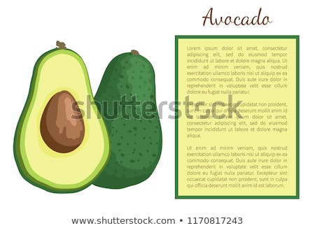 Avocado Alligator Pear Exotic Juicy Fruit Vector Stock photo © robuart