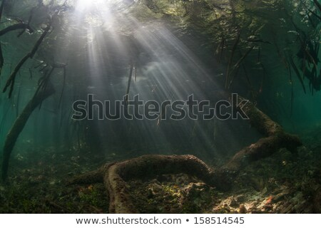 Сток-фото: облака · лес · пейзаж · морем · лист · деревья