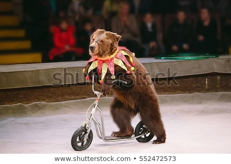 circus animals stock photo © colematt
