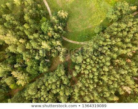 Aerial view from the drone forest foliage with green glade and road on a clear summer day. Top view Stock photo © artjazz