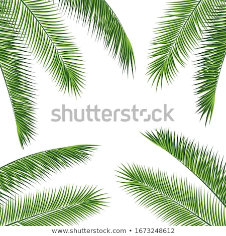 summer banner with frame for text green palm tree stock photo © robuart