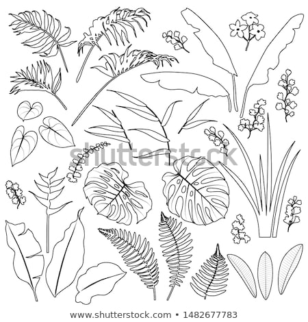 Collection of Different Tropical Leaves Set Vector Stock photo © pikepicture