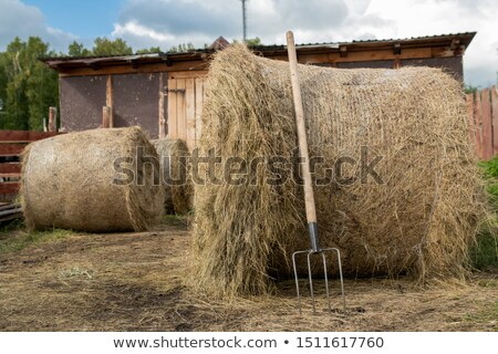 Three huge stacks of fresh hay and hayfork by one of them on background of barn Stock photo © pressmaster