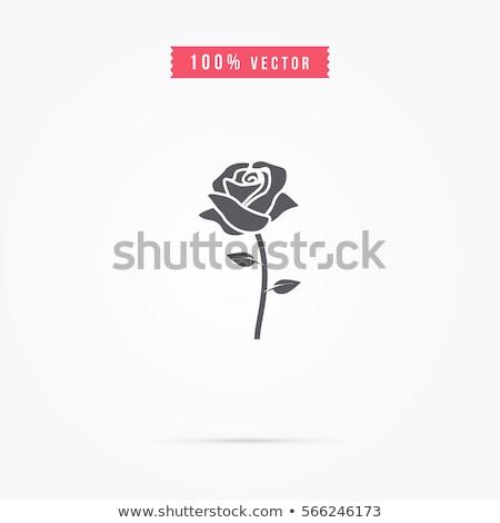 Belleza aumentó vector de la flor icono plantilla de diseño primavera Foto stock © Ggs