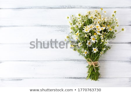 Background from camomile Stock photo © RuslanOmega