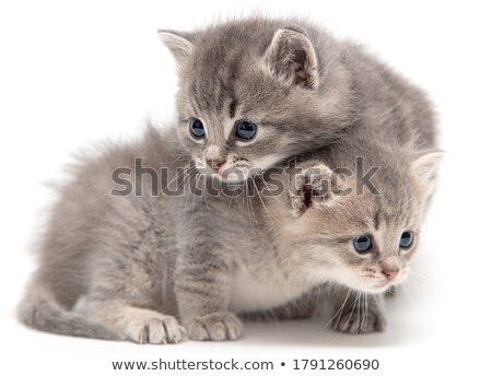Сток-фото: два · котенка · молодые · белый · кошки · ходьбе