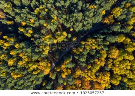Erdő fenyőfa eltorzult halszem lencse égbolt Stock fotó © alexeys