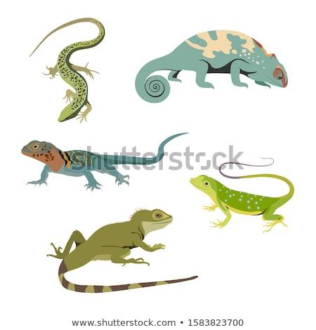 Iguana réptil sessão árvore corpo verde Foto stock © Witthaya