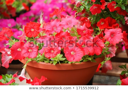 varanda · flores · flor · casa · edifício - foto stock © nailiaschwarz