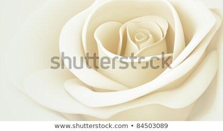 pourpre · humide · rose · résumé · belle · macro - photo stock © prill