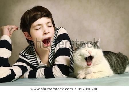 sonolento · gato · preguiçoso · adormecido · dia · engraçado - foto stock © ca2hill
