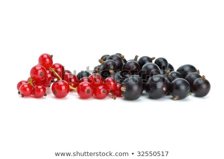 some blackcurrants and redcurrants berries stock photo © digitalr