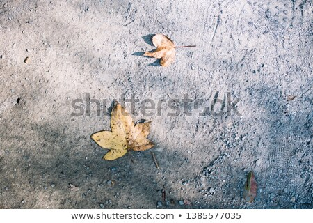 Rotten dead leaves on ground. Stock photo © ultrapro