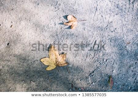 Marcio morti foglie terra erba albero Foto d'archivio © ultrapro