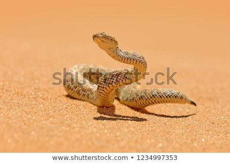 Desert Snake Stock photo © Kirill_M