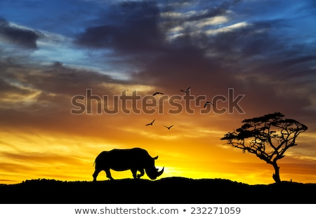 rhinos at sunset with reflection stock photo © sognolucido
