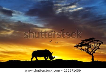 закат отражение иллюстрация два лес природы Сток-фото © sognolucido