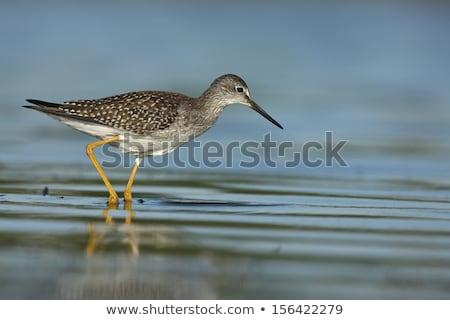 画像 立って 岩 海 鳥 羽毛 ストックフォト © nialat