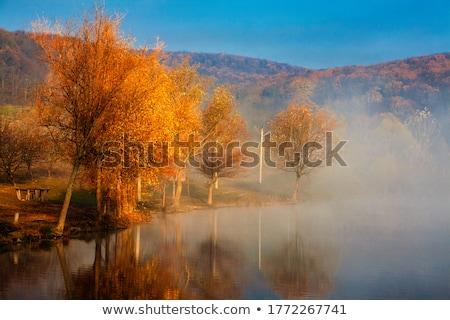 fog over autumn river stock photo © givaga