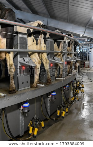 Cow milking facility in a modern farm Stock photo © ymgerman
