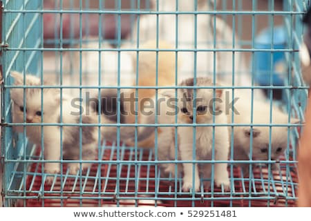 Tabby kitten in a cage meowing Stock photo © suemack