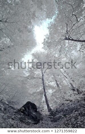赤外 森林 黒白 画像 歩道 葉 ストックフォト © ldambies